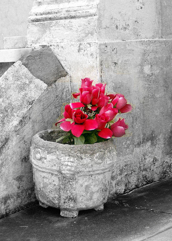Flowers Poster featuring the photograph Layfayette No One Red Roses by Heather S Huston