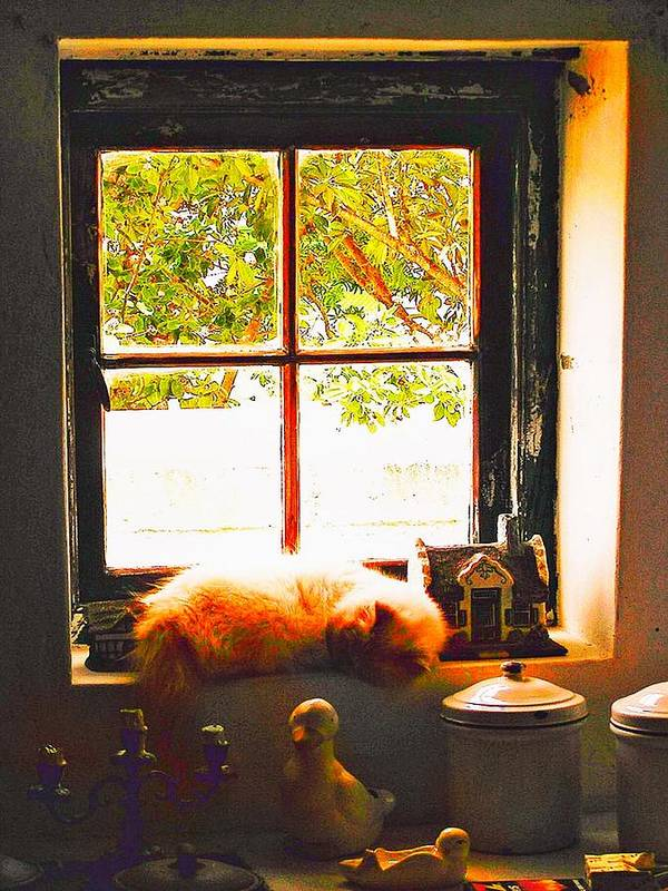 Window Poster featuring the photograph Lazy Day by Michael Durst