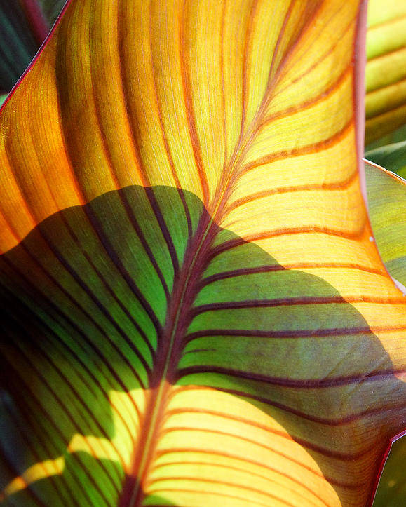 Everett Spruill Poster featuring the photograph Leaf 1 by Everett Spruill