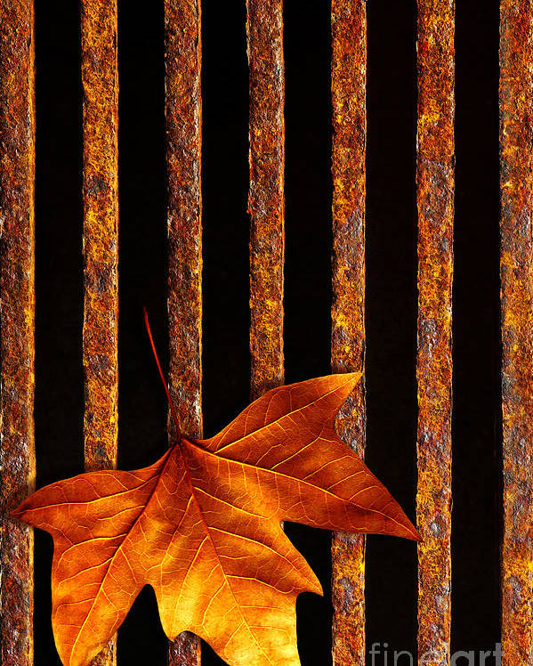 Abstract Poster featuring the photograph Leaf In Drain by Carlos Caetano