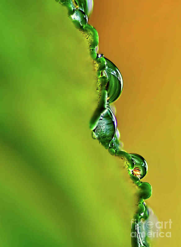 Photography Poster featuring the photograph Leaf Profile And Water Droplets by Kaye Menner