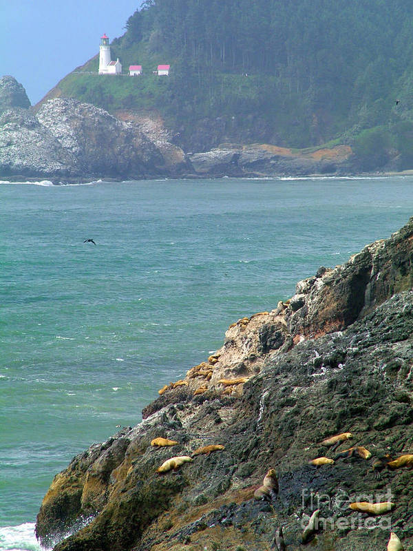 Light House Sea Lions Ocean Beach Poster featuring the photograph Light House And Sea Lions by Nick Gustafson