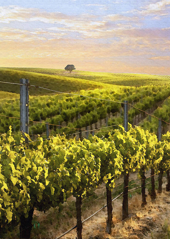 Vineyard Poster featuring the digital art Lighted Vineyard by Sharon Foster