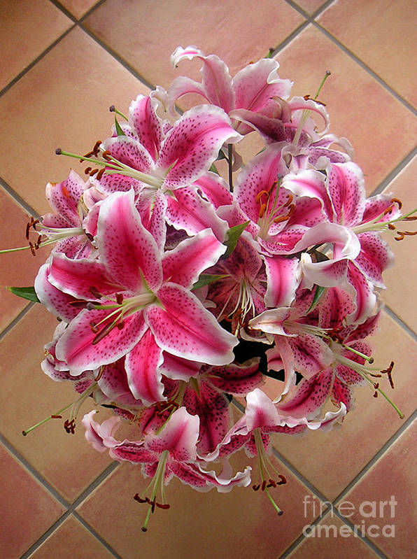 Nature Poster featuring the photograph Lilies Gathered On Tile by Lucyna A M Green