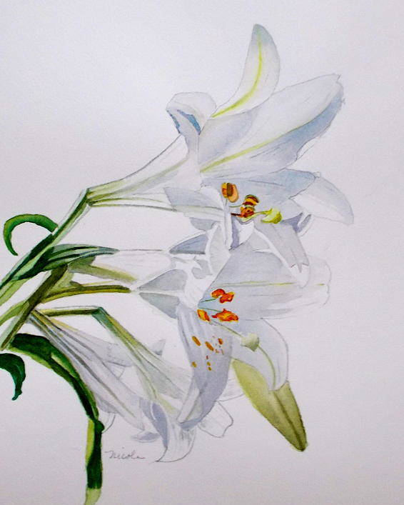 Lily. Flower Poster featuring the painting Lily by Nicole Curreri
