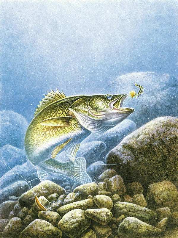Jon Q Wright Poster featuring the painting Lindy Walleye by JQ Licensing