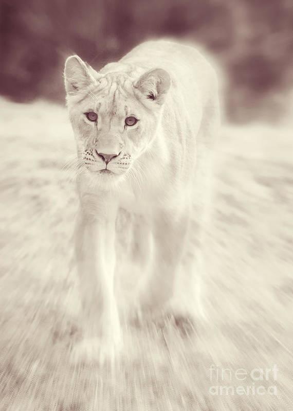 Lion Spirit Animal Poster by Chris Scroggins