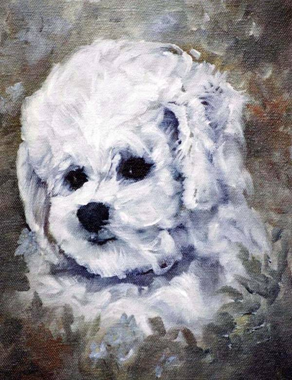 Animal Poster featuring the painting Little Bichon by Jimmie Trotter