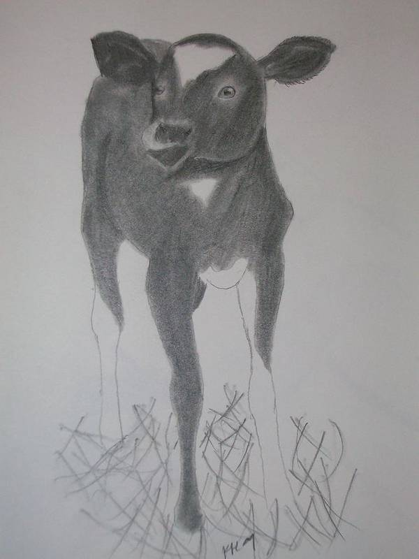 Cow Poster featuring the drawing Little Calf by Kristen Hurley