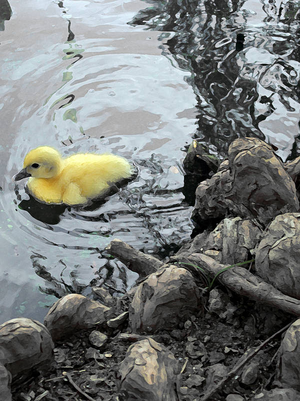 Duck Poster featuring the photograph Little Ducky 2 by Angelina Vick