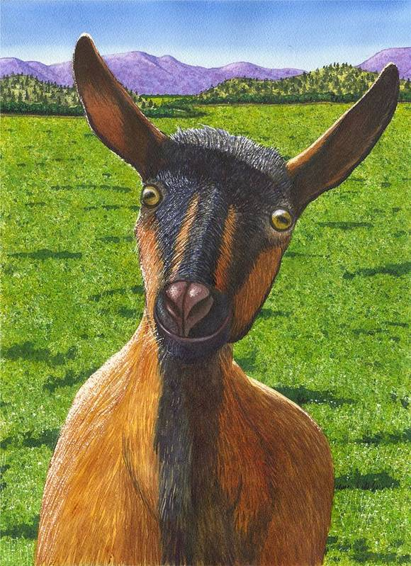 Goat Poster featuring the painting Little Goat by Catherine G McElroy