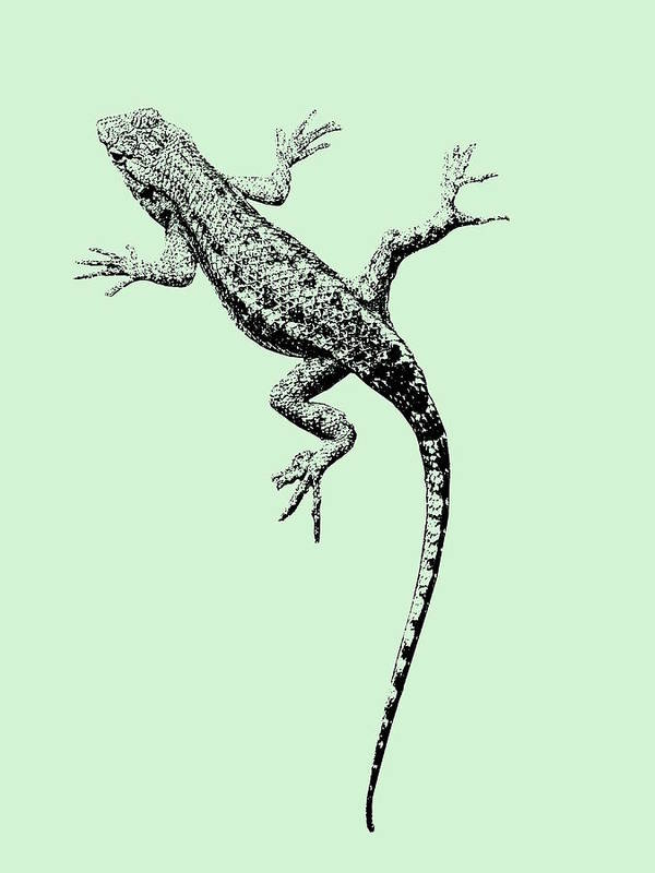 Lizard Poster featuring the photograph Lizard In Sage Green by Colleen Cornelius