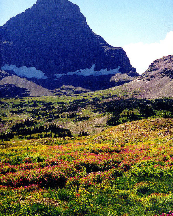Glacier National Park Poster featuring the photograph Logans Pass in Glacier National Park by Nancy Mueller