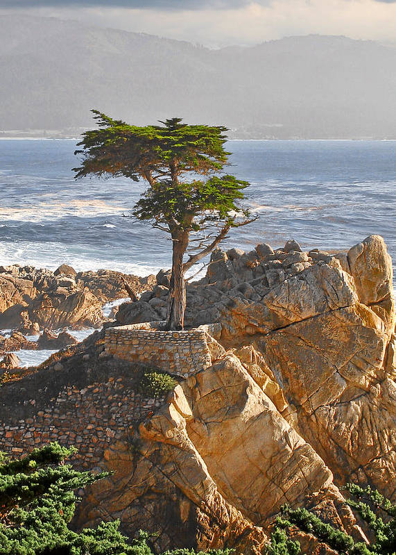 Pine Poster featuring the photograph Lone Cypress - The icon of Pebble Beach California by Christine Till