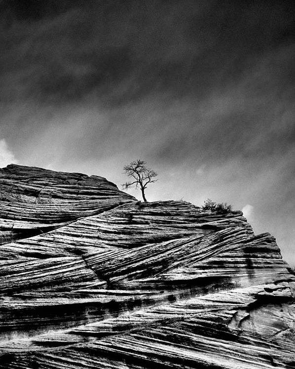 B&w Poster featuring the photograph Lone Tree Rid by Sarah-jane Laubscher