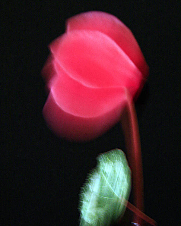 Flower Poster featuring the photograph Loneliness by Robert Shahbazi