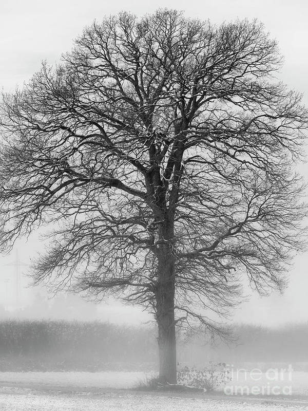 Tree Poster featuring the digital art Lonely Winter Tree by Elisabeth Lucas