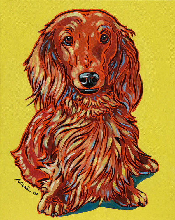 Dachshund Poster featuring the painting Long Haired Dachshund by Nadi Spencer