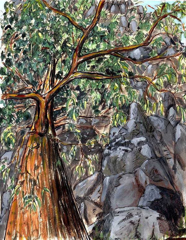 Trees Rock Steep Hill Tasmania Poster featuring the painting Look Up by Bethwyn Mills
