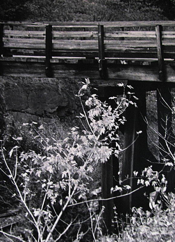 Bridges Poster featuring the photograph Lost Bridge by Colleen Kammerer