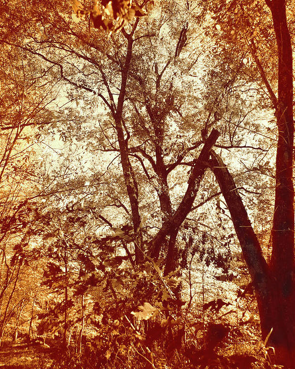 Lost Poster featuring the photograph Lost In The Forest by Nina Fosdick