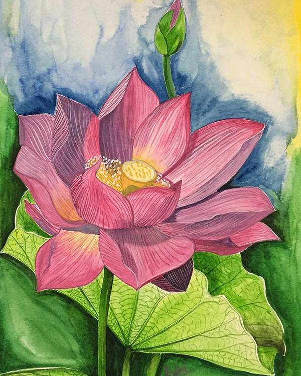 Lotus Flower In Water Color Poster By Pushpa Sharma