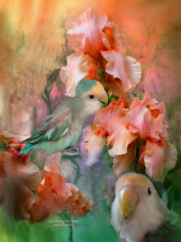 Lovebird Poster featuring the mixed media Love Among The Irises by Carol Cavalaris