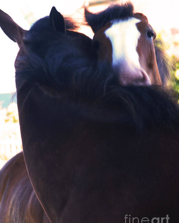 Horse Poster featuring the photograph Love by Linda Shafer