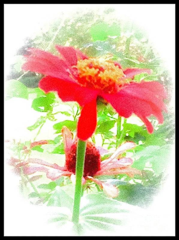Red Poster featuring the photograph Lovely As A Summer's Dream by Debra Lynch
