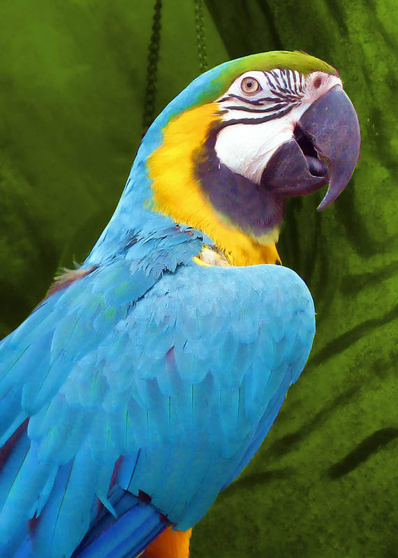 Bird Poster featuring the photograph Macaw by JAMART Photography