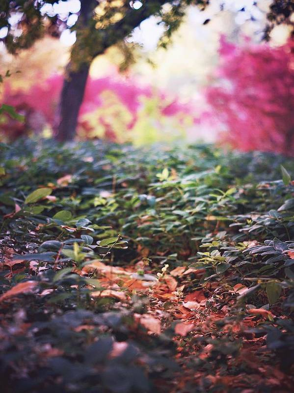 Landscape Nature Foliage Autumn Leaves Trees Poster featuring the photograph Magic Is Everywhere by Becca Stauffer