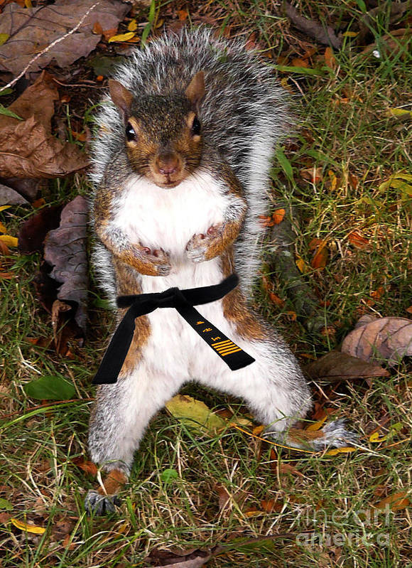 Squirrel Poster featuring the photograph Make My Day by Jeff Breiman