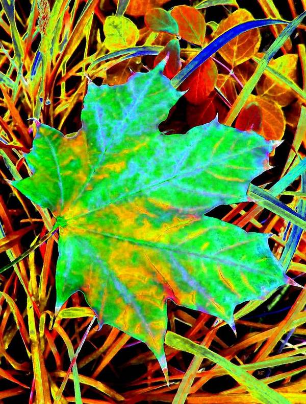 Maple Leaf Poster featuring the photograph Maple Mania 21 by Will Borden