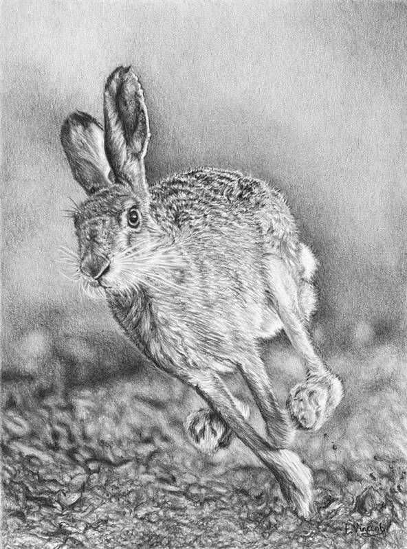 Hare Poster featuring the drawing Need For Speed by Frances Vincent