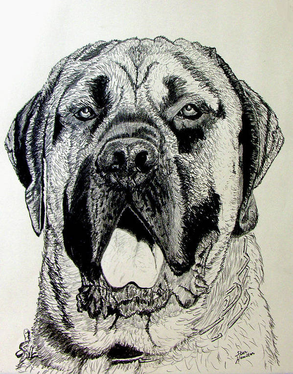 Mastiff Poster featuring the drawing Mastiff by Stan Hamilton
