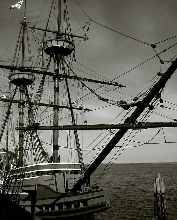 Mayflower Poster featuring the photograph Mayflower by Heather Weikel