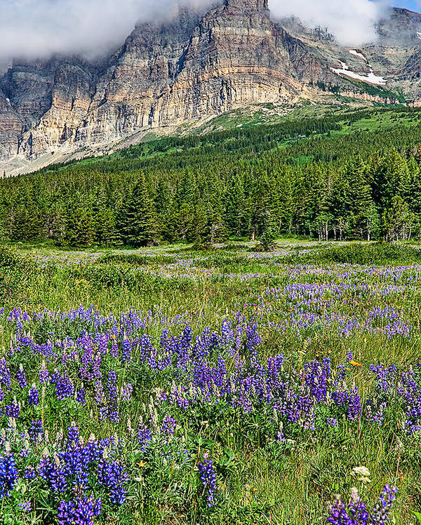 Vertical Poster featuring the photograph Meadow With Lupines by Merilee Phillips