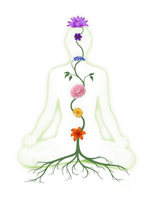 Meditating Woman With Chakras Shown As Flowers Poster By Maxim