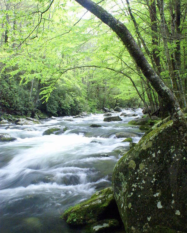 Stream Rive Poster featuring the photograph Middle Fork River by Marty Koch