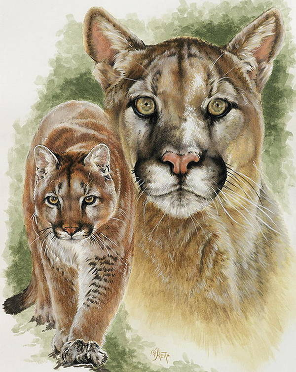Cougar Poster featuring the mixed media Mighty by Barbara Keith
