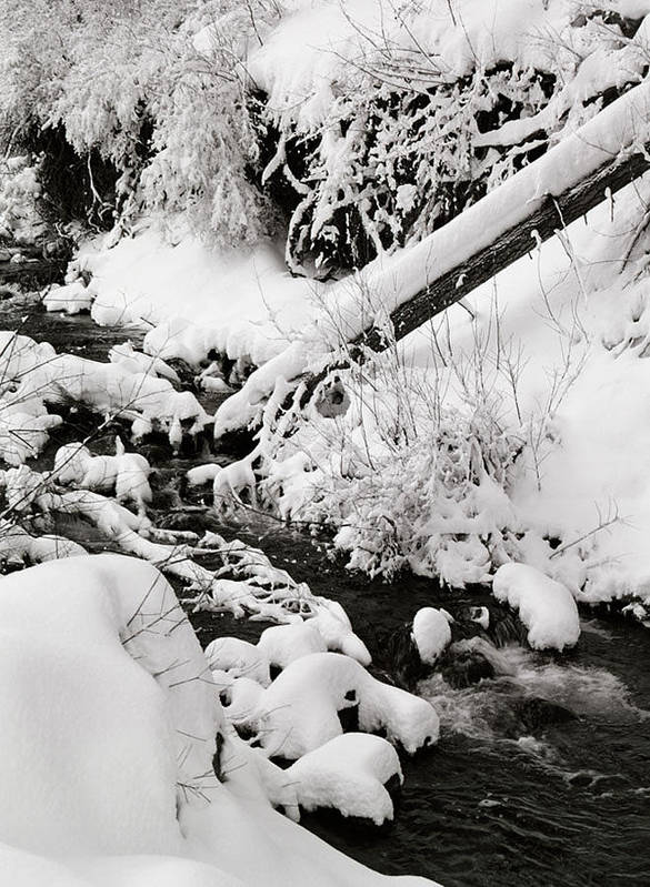 Mill Creek Poster featuring the photograph Mill Creek Canyon in Winter by Dennis Hammer
