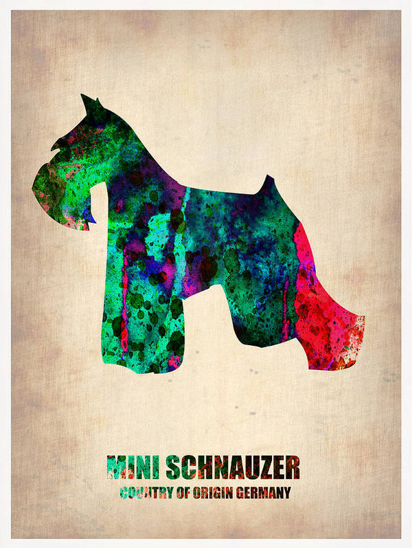 Miniature Schnauzer Poster featuring the painting Miniature Schnauzer Poster 2 by Naxart Studio