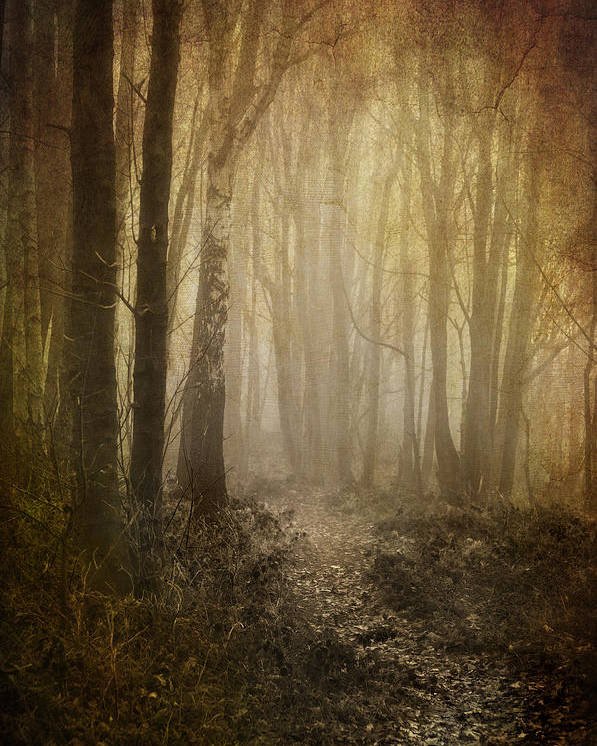 Aged Poster featuring the photograph Misty Woodland Path by Meirion Matthias