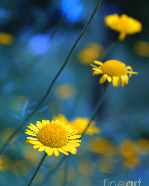 Daisies Poster featuring the photograph Momentum 04a by Variance Collections