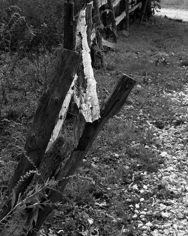 Ansel Adams Poster featuring the photograph Momsvisitfence2 by Curtis J Neeley Jr