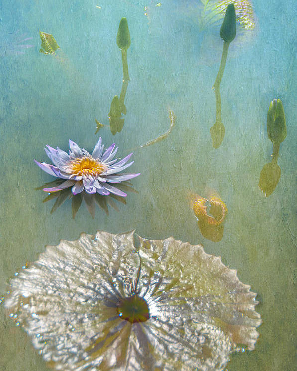Waterlily Monet Textures Water Flowers Fauna Poster featuring the photograph Monet Inspired by Carolyn Dalessandro