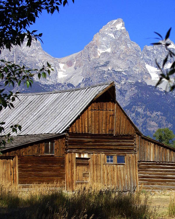 Barn Poster featuring the photograph Mormon Row Barn 1 by Marty Koch