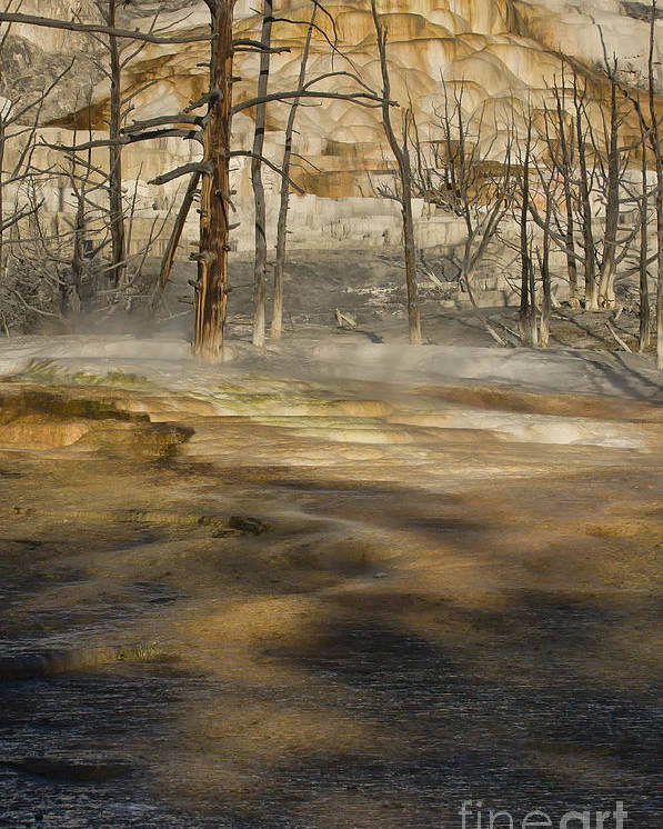 Yellowstone Poster featuring the photograph Morning Light On Mammoth Terrace by Sandra Bronstein