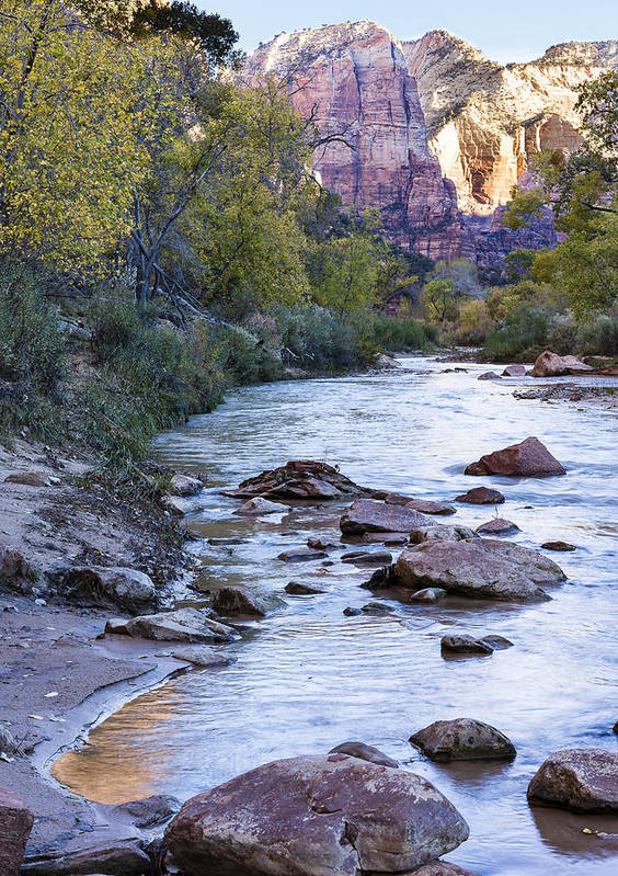 Zion Poster featuring the photograph Morning On The Virgin River by Bob Camp