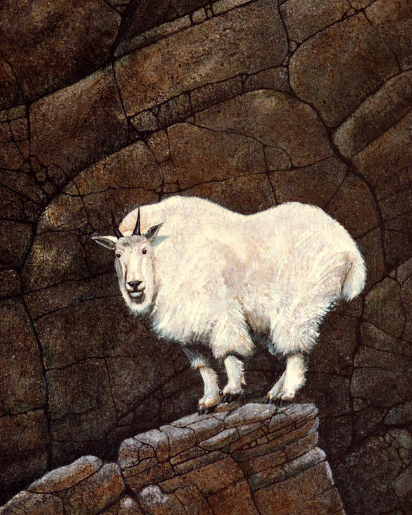 Wildlife Poster featuring the painting Mountain Goat by Frank Wilson